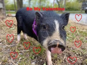 Valentine's at the Farm in Queen Anne's County, Maryland